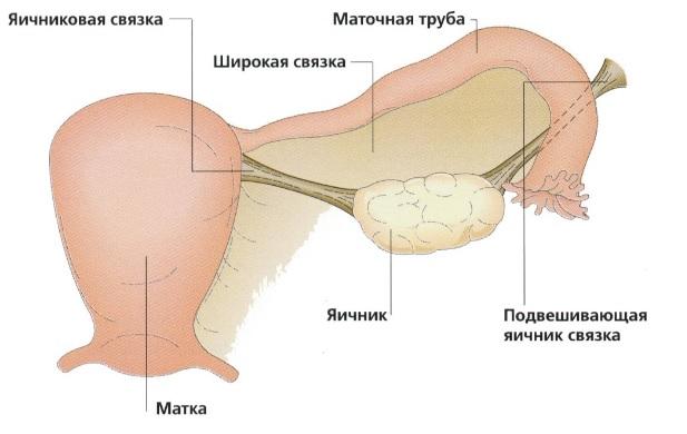 Болезненная овуляция: причины, симптомы, лечение5
